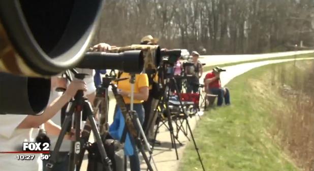 'Paparazzi' gathers to celebrate return of Ospreys