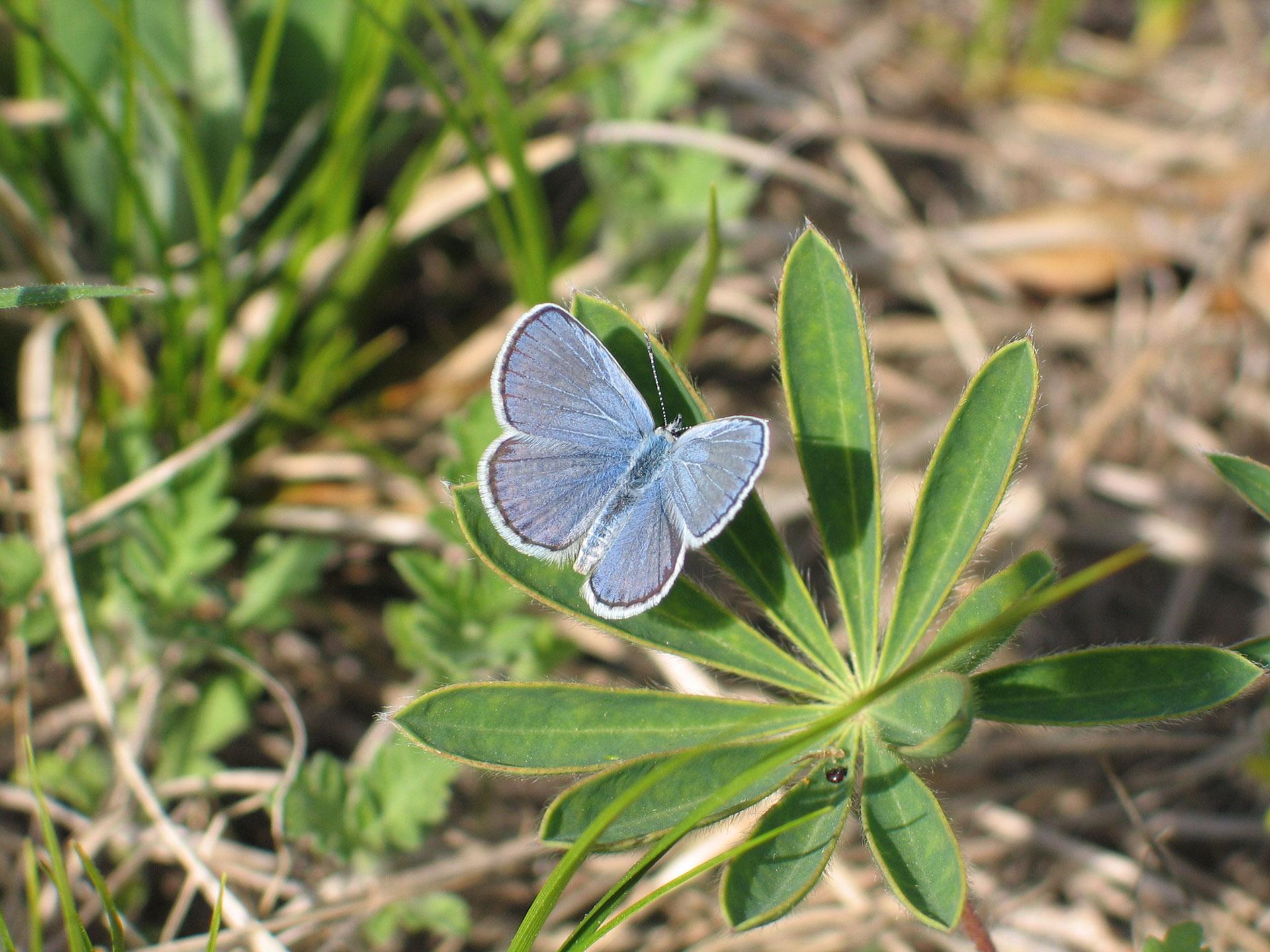Habitat management allows diverse species to thrive