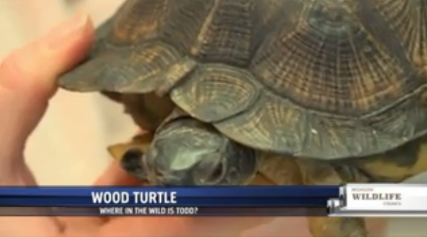 Wild turtles protected at Blandford Nature Center