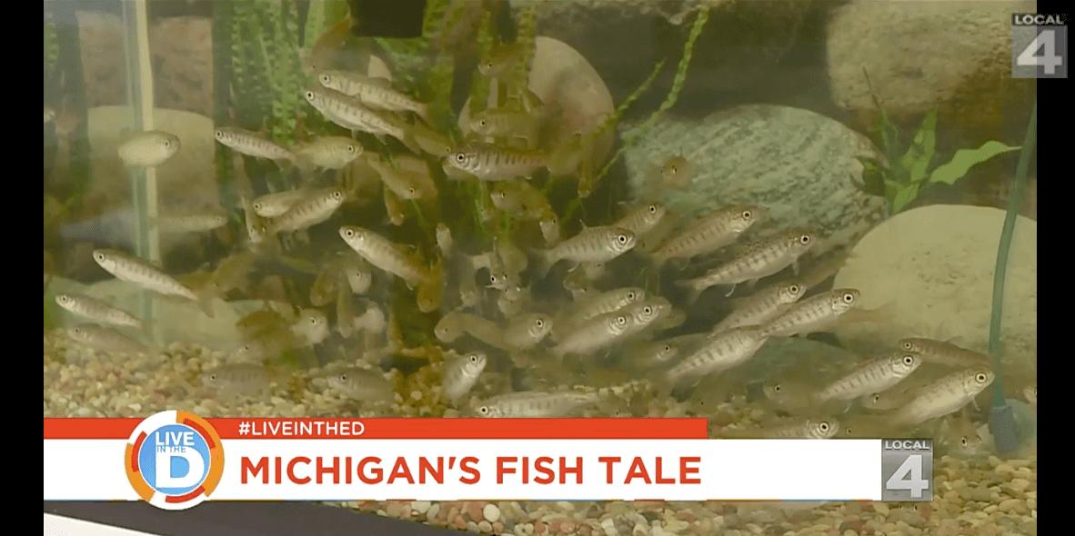 Michigan's fish tale