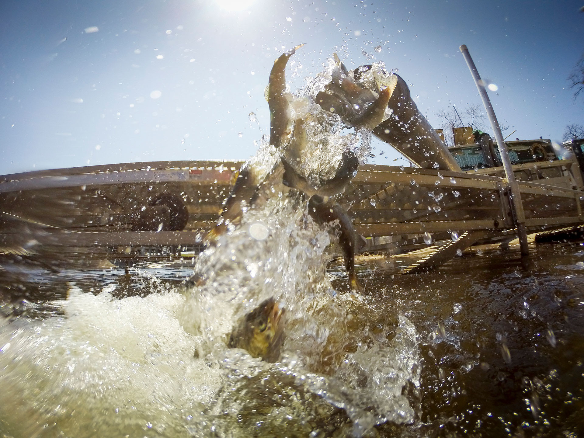 Michigan fish hatcheries help balance the ecosystem