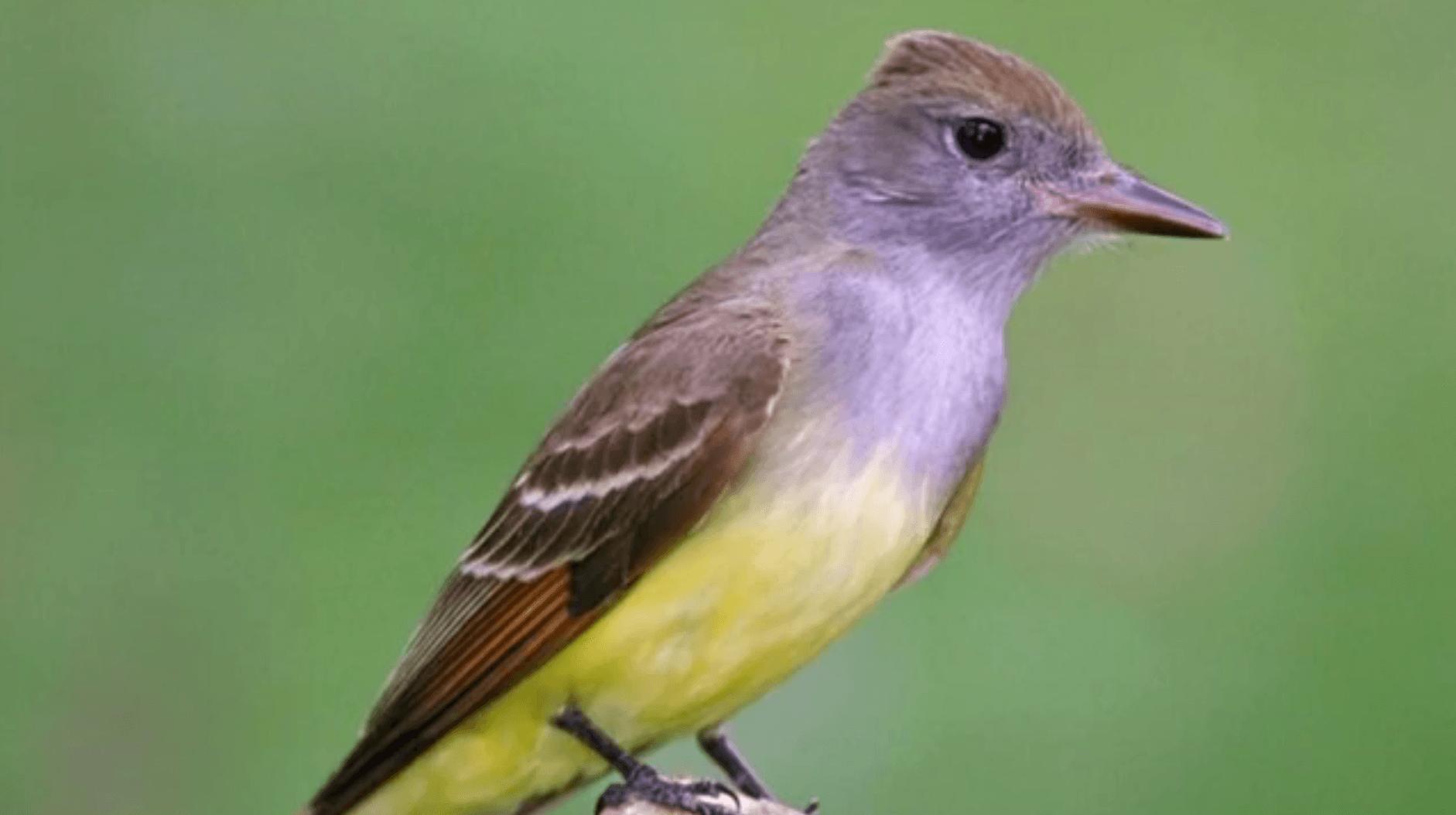 Enjoying and protecting Michigan's birds