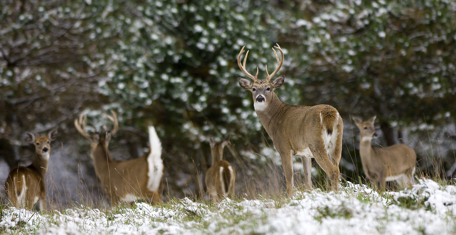 Hunting contributes year-round benefits to wildlife
