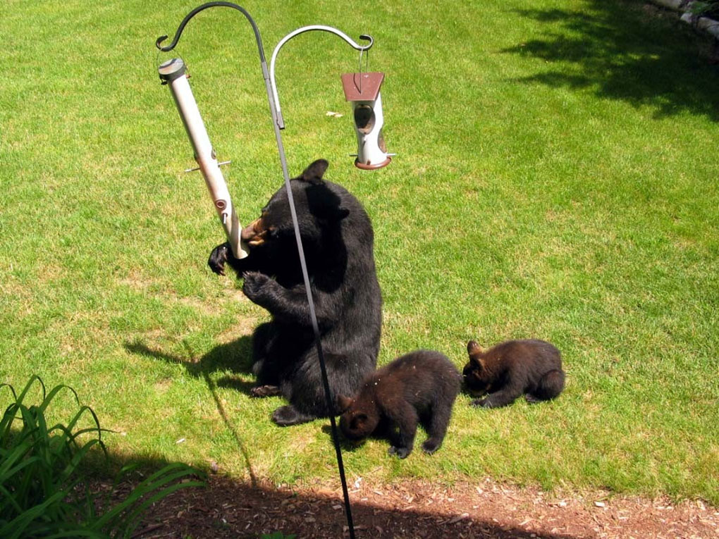 Bears eating from birdfeeder
