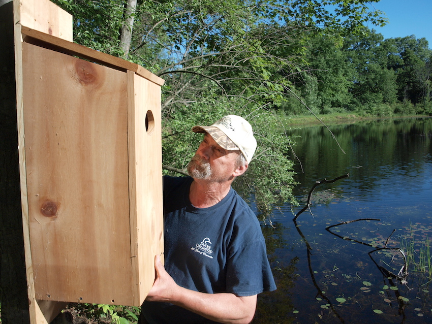 Man installs wooden box to support wood duck nesting