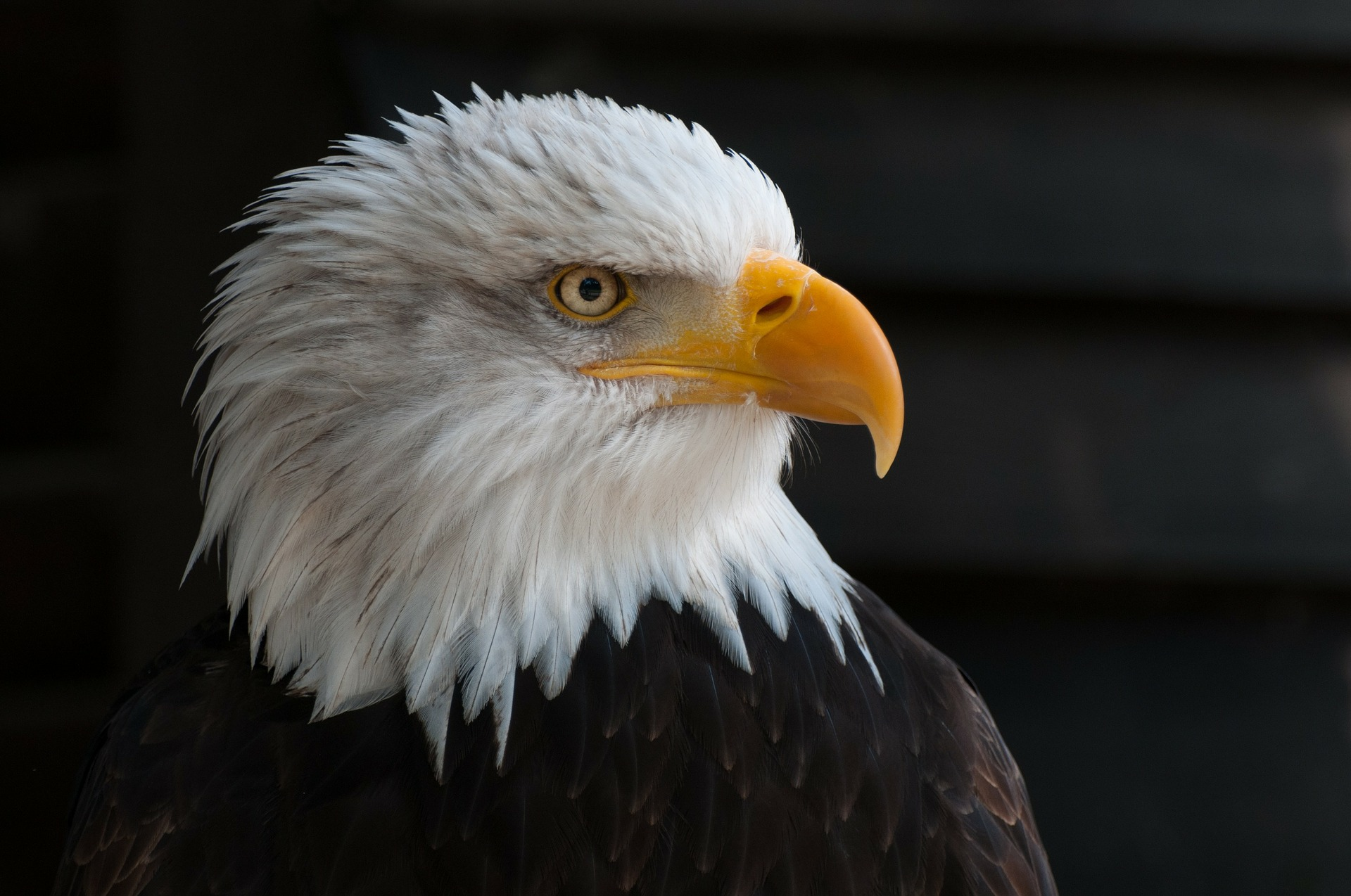 Michigan's bald eagle population is rebounding after locals' teamwork