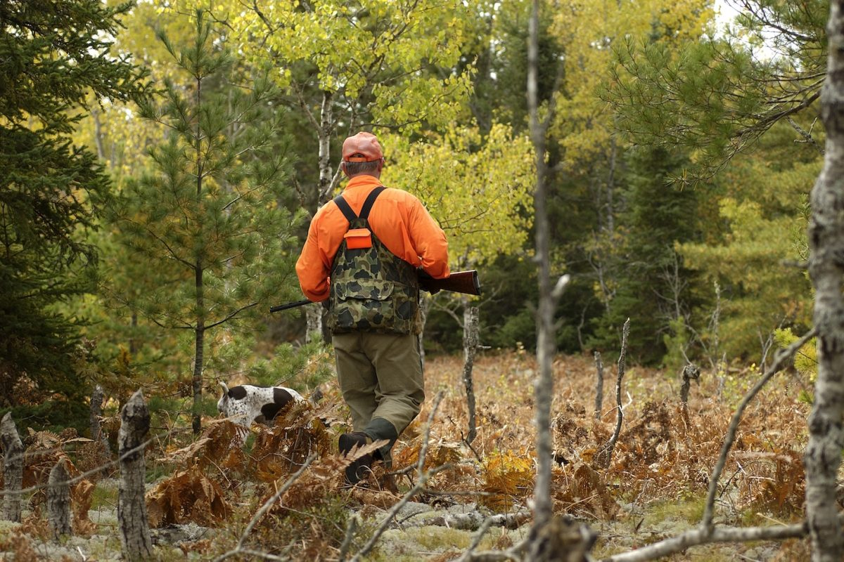 Man walks through wooded area while grouse hunting