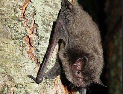 What you can do to protect the bat population in Michigan