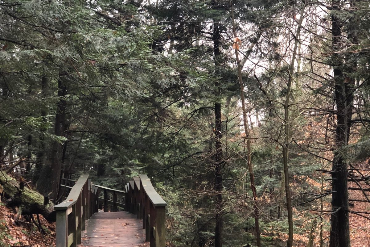 Hemlock trees frame a wooden foot bridge in a forested area