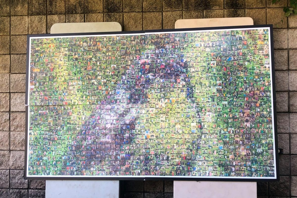 A large photo mosaic depitcts a grey and yellow songbird