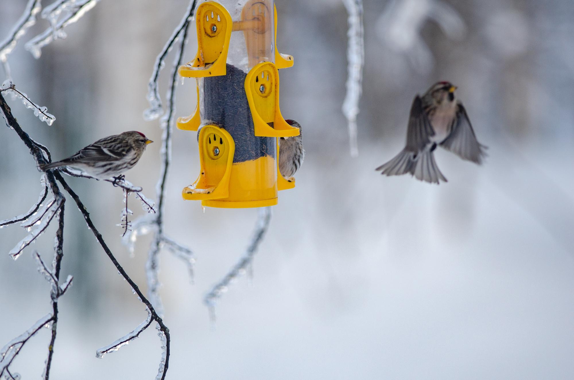 Catch rare sightings of winter wildlife in Michigan