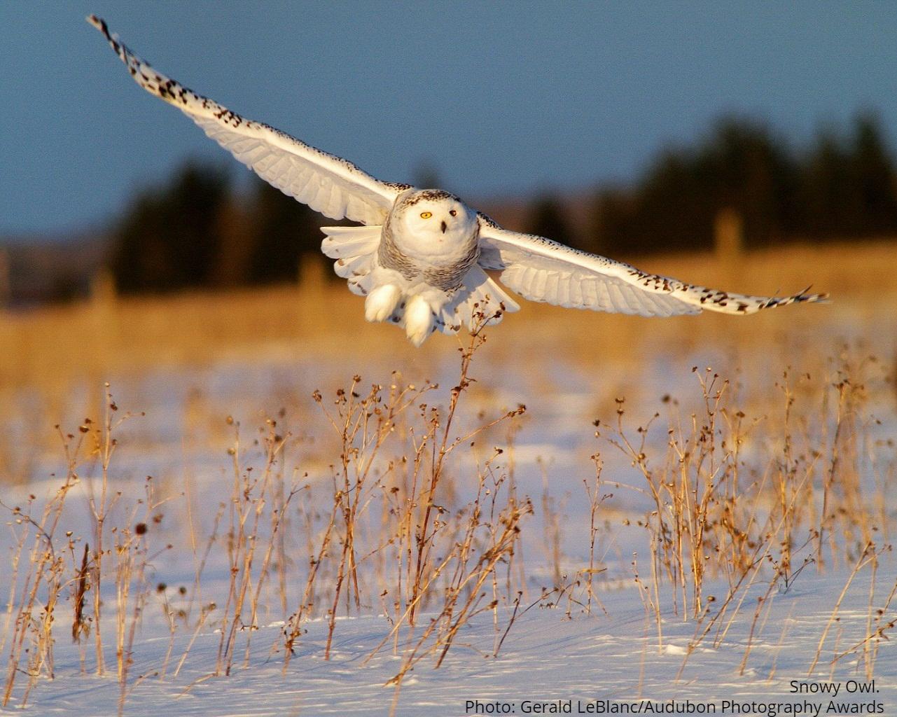 Michigan's Winter Birds