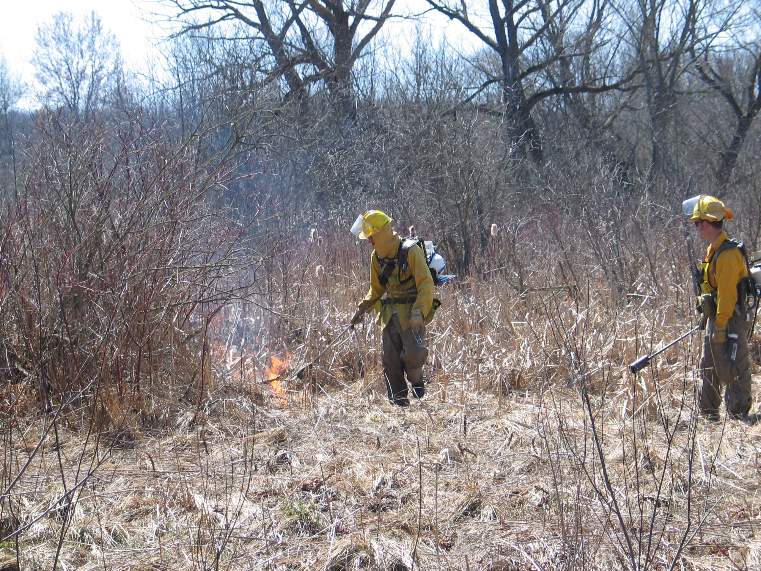 Wildlife management experts methodoically set fire to grasses